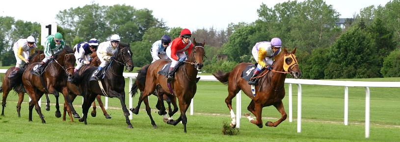how to pick winning horses free